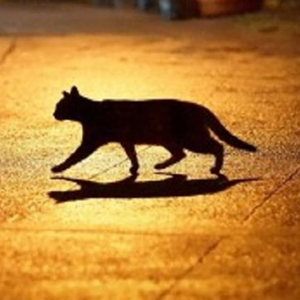 जब बिल्ली रास्ता काटे  तो क्या करे
