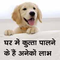 घर में कुत्ता पालने के हैं अनेकों लाभ